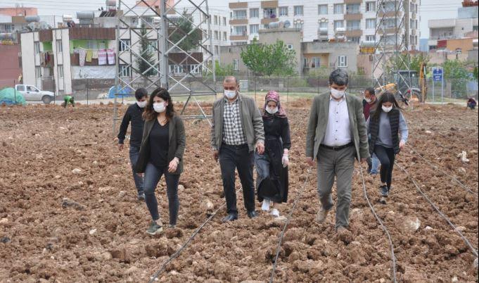 Siirt Belediyesi'nden ekolojik tarım adımı