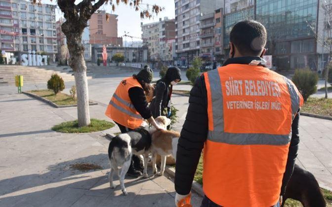Siirt Belediyesi'nden sokak hayvanları projesi
