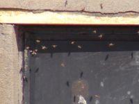 Arılardan Dehşet Gelişme Köyü Bastı Olanlar Oldu