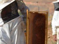 Organik Bal Öretimini Artırıyorlar