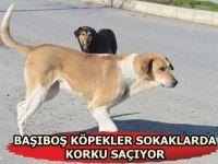 Siirt Başı Boş Köpekler Tehlike Saçıyor