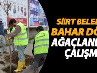 Siirt Belediyesi baha dönemi ağaçlandırma çalışması