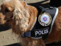Maden göçüğü aramasında eğitimli köpek desteği