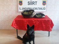 Siirt Baykan'da uyuşturucu operasyonu! 1 kişi gözaltına alındı
