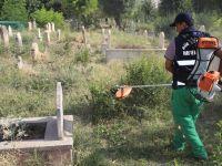 Mezarlıklarda Yabani Ot ve Bitkiler Toplanıyor