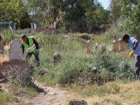 Bayram Öncesi Mezarlıklarda Yabani Ot Ve Bitkiler Toplanıyor