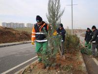 Siirt Belediyesi'nden ağaçlandırma çalışması