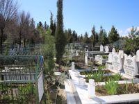 Siirt'te Mezarlıklara Dikilmek Üzere Fidan Bırakılacak