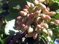 Siirt'in 10 tarım projesi onaylandı