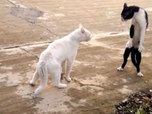 Bruce Lee'nin Kayıp Kedisi (Şok Olacaksınız)